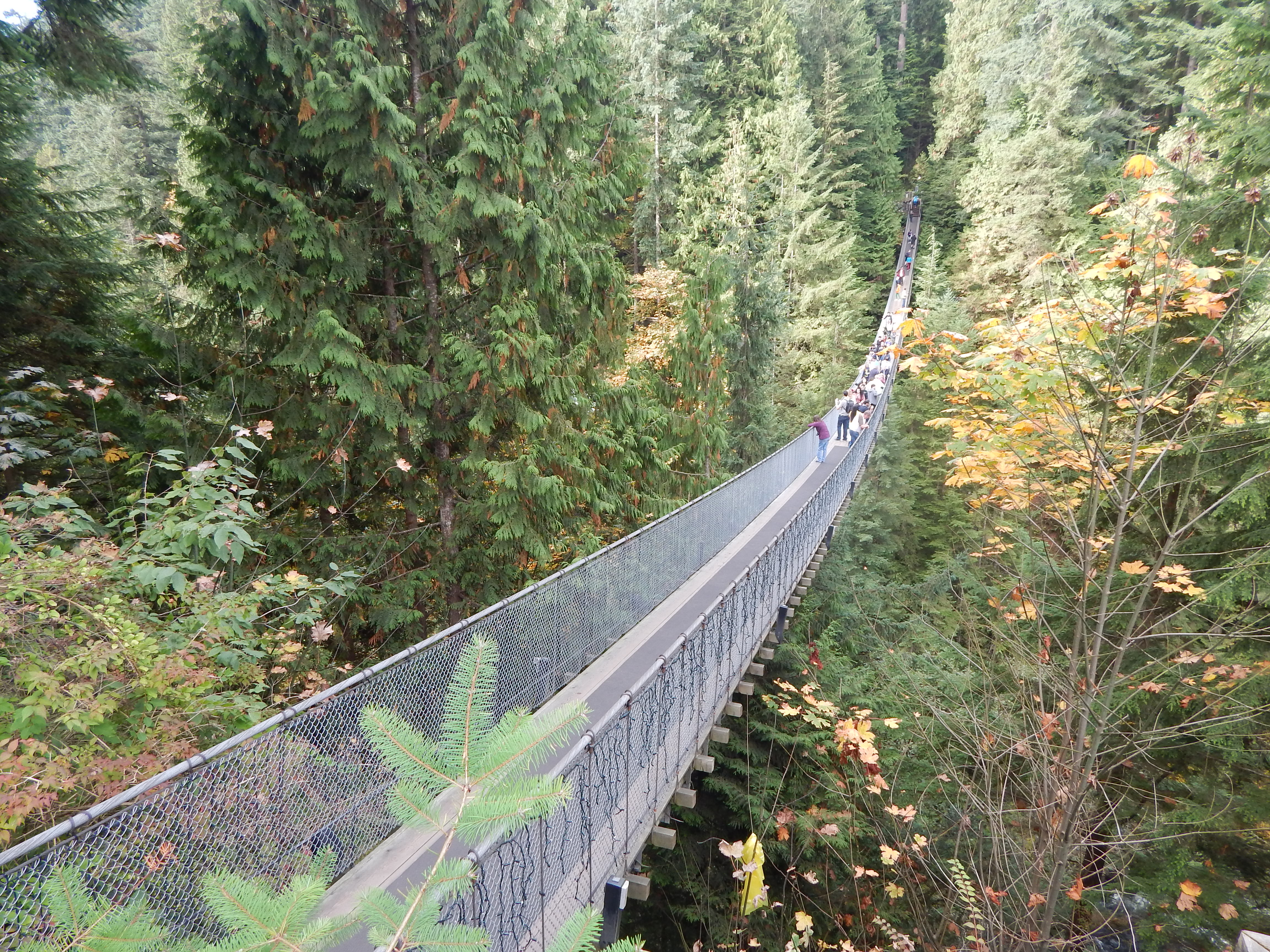 The suspension bridge is 230 feet above the Capilano River.